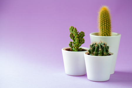 Succulent Plants group in a little pot isolated on violet
