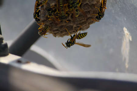 Wasps nest in the windshield of a vehicle (blurred parts) Archivio Fotografico