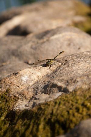 ali: libellula sul fiume...