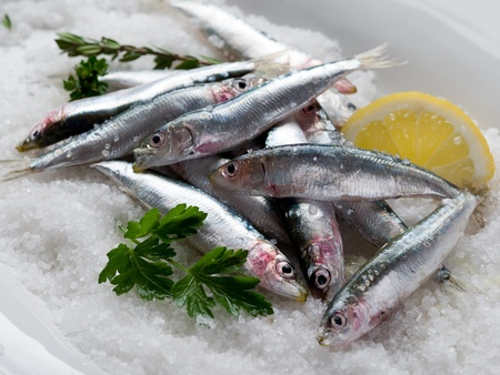 group of fresh sardines over salt photo