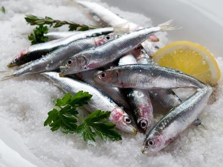 sardinas: Grupo de sardinas frescas sobre sal