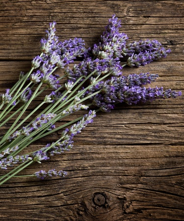 lavandula: lavender flower