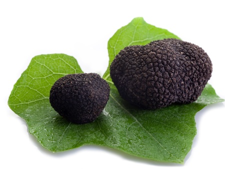 truffe blanche: truffe noire sur la feuille sur fond blanc Banque d'images