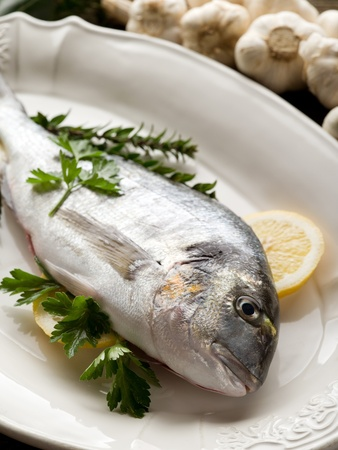 ready to cook food: gilthead over dish ready to cooking Stock Photo