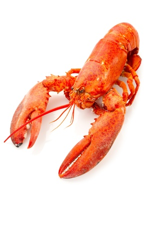 boiled lobster-aragosta bollita Stock Photo - 10242494