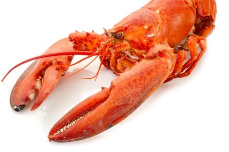 whole lobster boiled - aragosta bollita