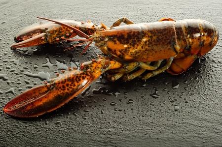 raw lobster: langosta cruda sobre la piedra negro