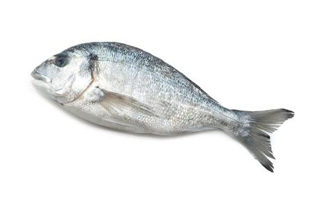 fish clipart: Gilt-head on white