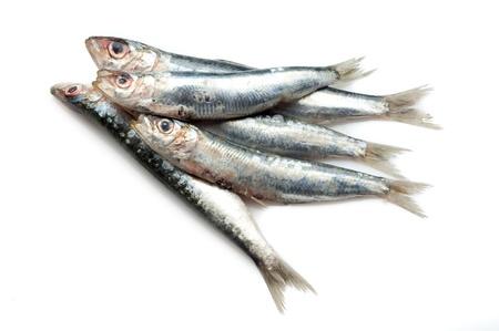 pez espada: Sardinas en blanco Foto de archivo