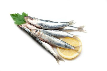 sardinas: Sardinas en blanco Foto de archivo