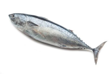 fish clipart: tuna on white background