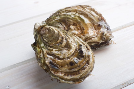 fresh french oyster photo