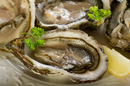 oyster shell: fresh french oyster
