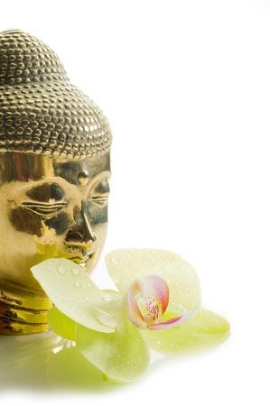 budda: buddha head with orchid