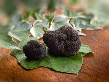 tuber: black truffle over leaf on wood background Stock Photo