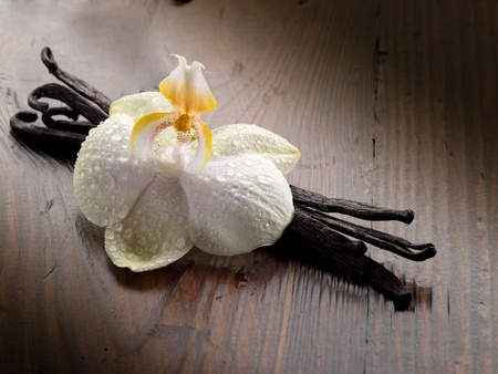 vanilla stick with orchid