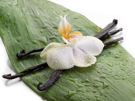 indian bean: vanilla stick with orchid