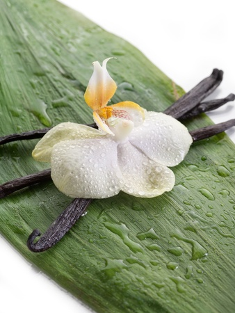 dried leaf: vanilla stick with orchid