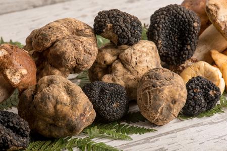 흰색 검은 트 뤼프와 버섯의 그룹