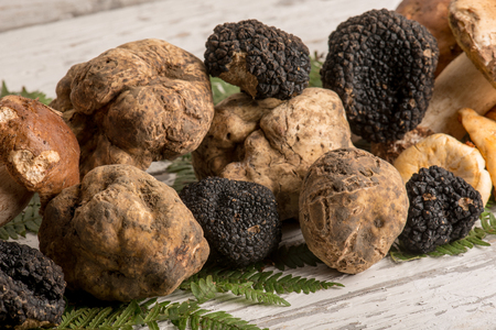 group of white  black truffle and mushroom Archivio Fotografico