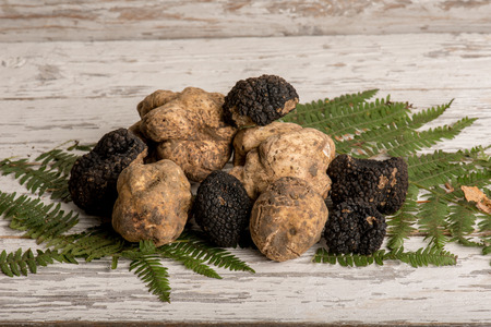 group of white and black truffle over wood background Banco de Imagens
