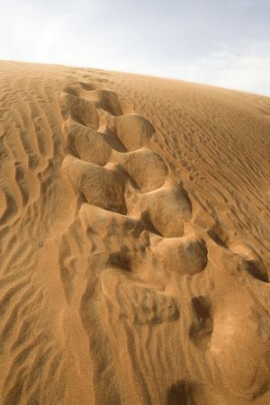A dune of sand in Dubai desert with track of off road car. photo