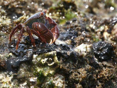 mozambique: Crab 2 found in Mozambique Stock Photo