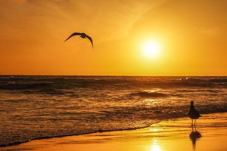 Aves en la puesta de sol Foto de archivo