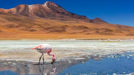 Flamingo on a lake in Atacama desert Stock Photo