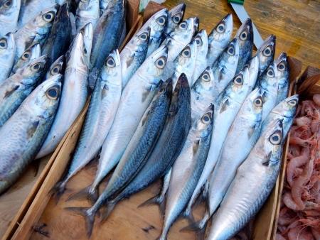 Sgombri al mercato del pesce