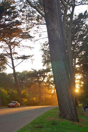 sunny evening in Golden Gate Park