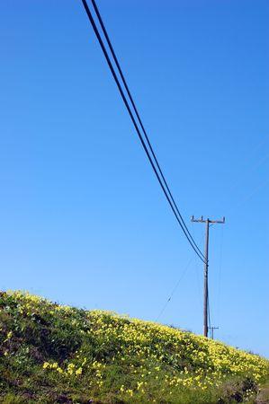 lente weiland op de kust van Californië