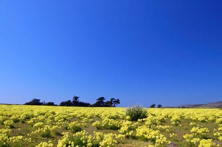 カリフォルニアの海岸に春の草原 写真素材