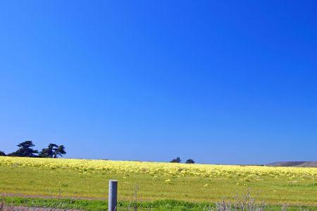 カリフォルニアの海岸に春の牧草地 写真素材
