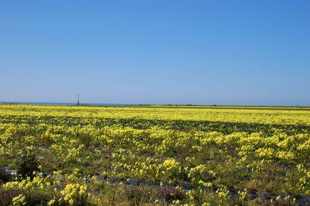 カリフォルニア海岸の春の草原