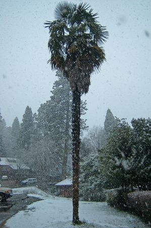 an unusual snowstorm in the hills north of Sacramento, California
