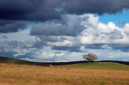 expansive: field and tree at the edge of a spring storm. this storm also spawned a tornado, unfortunately I did not see it Stock Photo