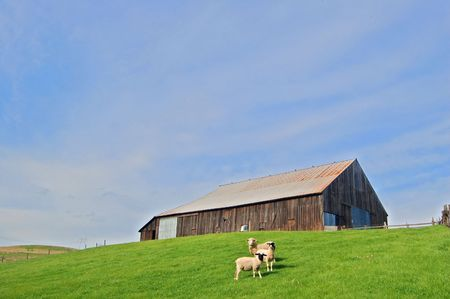 sheep on a hillside by a barn Stock Photo - 338826
