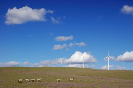 field with windmills and sheep