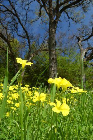 春の花の草原