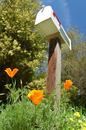mailbox in the springtime with flowers