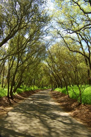 travelled: forest trail in spring