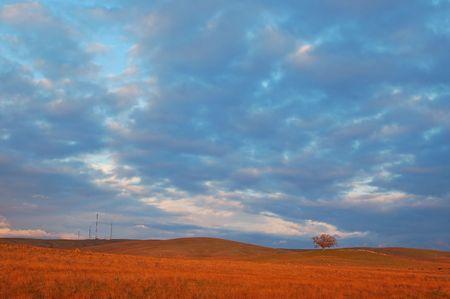 evening field with a lone oak tree