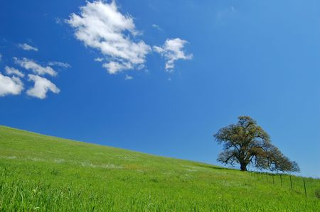 tree in a spring meadow photo