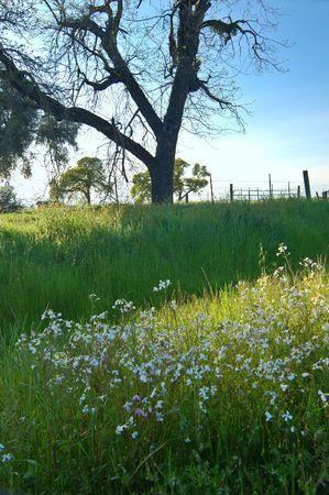 springtime meadow in the evening