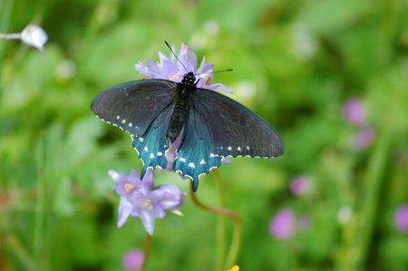 butterfly in a spring meadow