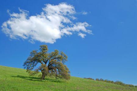 春の草原の木