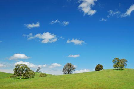 春の牧草地と木々
