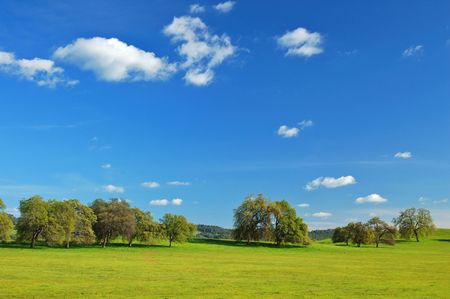 springtime meadow and trees photo