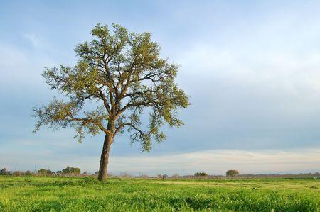 春の牧草地の木